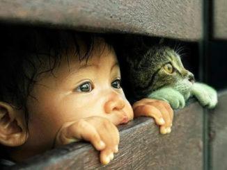 малыш с котом