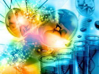 фото эмбриона при беременности