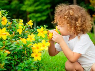 Попросите ребенка быть внимательным, если он нюхает цветы, чтобы не укусила пчела.